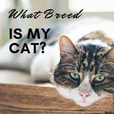 How To Determine My Cats Breed Identifying Mixed Breeds To