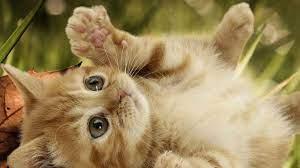 Cute Cat Wallpaper For Desktop - Cute ...