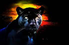 Black Panther Cat Wallpapers - Top Free ...