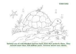 While kids can stick with the regular colors for these animals. Ocean Animal Coloring Pages For Kids
