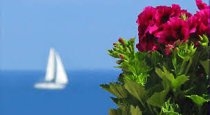 Image result for flowers on palm trees