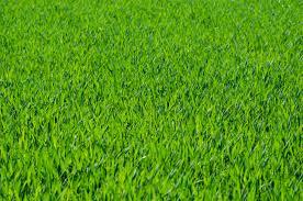 Grass background Blur Excellent Grass Texture Or Green Lawn Background Photo Myfreetextures Seven Free Grass Textures Or Lawn Background Images Www