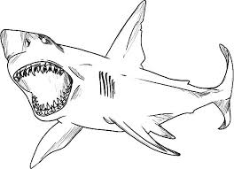 Small Picture Tiger Shark Coloring Page