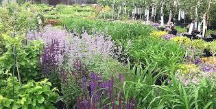 annuals perennials in frederick maryland welcome to barrick garden center
