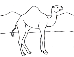 Small Picture Camel Coloring Page Samantha Bell