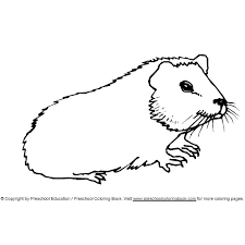 Small Picture Guinea Pig Colouring Pictures Print Great Coloring Pages With