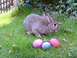 real sightings of the easter bunny. Plain Bunny Easter Bunny Sightings To Real Sightings Of The Easter N