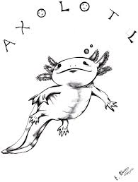 Small Picture Axolotl Drawing