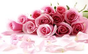 valentines day desktop wallpaper pink. Delighful Day Pink Rose On Valentines Day Wallpaper Wide For Desktop W