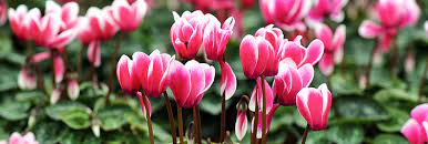 the most beautiful winter plants of