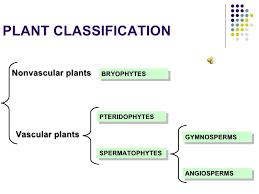 Plant Kingdom Classification Chart For Kids The Plant Kingdom