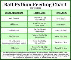 10 Best Ball Pythons Images Ball Python Python Ball