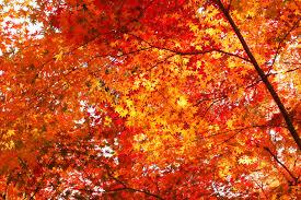 Resultado de imagen para hojas otoño