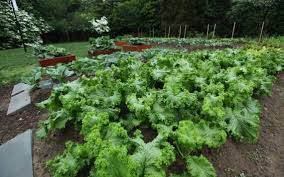 David Burke Kitchen Garden Debbie Arrington Home Garden Column Sacbeecom The