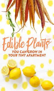 apartment vegetable garden. Beautiful Garden Edible_plants_apts_pin Inside Apartment Vegetable Garden