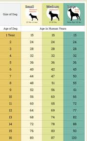 Pin By Katie Cook On Claws Dogs Dog Age Chart Dog Ages