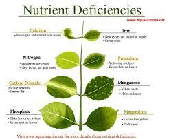 Aquarium Plants Nutrient Deficiency Freshwater Plants