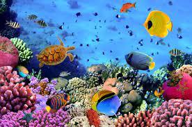 Desktop Wallpaper Hd Underwater