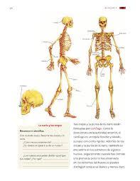 Libro de ciencias naturales 4 cuarto grado 2020 2021. Movimientos Del Cuerpo Y Prevencion De Lesiones Bloque I Tema 1 Apoyo Primaria