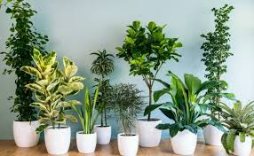 modern office plants. Modern Office Plants. Exquisite Plant House Plants Stunning Cool Indoor 10 Best Nyc O