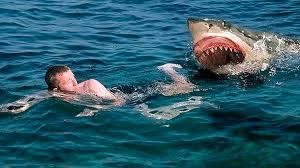 Resultado de imagen de tiburon