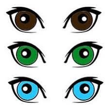The Genetics Of Eye Color
