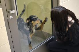 animal shelter dogs for adoption. Delighful Shelter Adopt A Pet Inside Animal Shelter Dogs For Adoption E