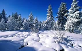 winter snow scenes wallpapers mobile patible dsc100798029 jpg