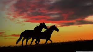 wild horses running wallpaper. Standard For Wild Horses Running Wallpaper Wallpapers Wide