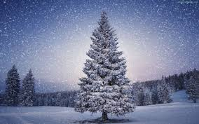 AMB Wallpapers provides you the latest Snow Winter Trees Wallpaper. We  update the latest collection