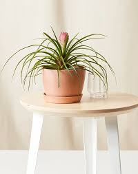 According to the aspca animal poison control center, there were nearly 12,000 calls in 2018 related to ingesting common indoor and outdoor houseplants. 31 Cat Friendly Plants Safe For Your Furry Friend Purewow