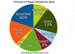 Basal Metabolic Rate Bmr Chart Metabolic Damage Scoobys Home Workouts