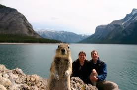 avoiding mergers photography. Avoiding Mergers Incorrect. Picture. Http://1funny.com/wp-content/uploads/2009/08/squirrel-photo-bomb.jpg Photography
