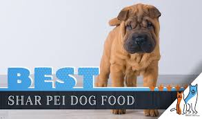 9 Best Dog Foods For Shar Peis Plus Top Brands For Puppies