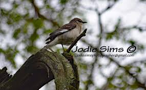 Jodie Sims - Photographer - About | Facebook