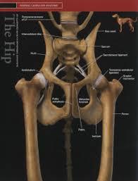 symptomen alvleesklierontsteking hond