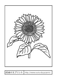 夏の花 画像 無料