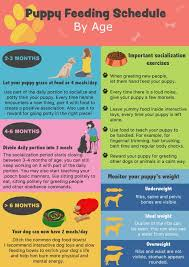 Dog Chart For Age Puppy Feeding Schedule Look At The Chart Follow The Tips