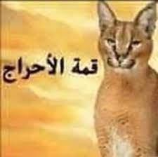 Mamdouh NasrAllah Twitterissä: