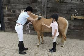 How To Measure A Horses Height