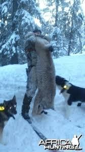 lynx size monster lynx hunting