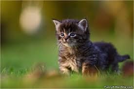 cute fluffy kittens. Interesting Kittens Cute Fluffy Kitten Throughout Kittens Y