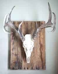 bull skull decor skull head decor best skull mount images on deer head decor steer head