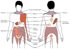 Pain Referred From Viscera Laurence Hattersley Osteopath
