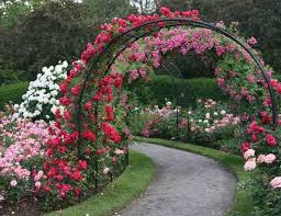Small Picture Best Of Rose Garden Design Ideas Climbing Roses Rose Shrubs