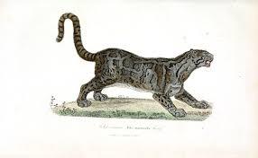 ocelot size animal buffon cat ocelot vintage printable at swivelchair