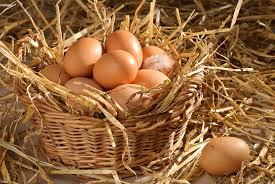 Image result for fresh egg