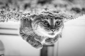 1001 Lustige Katzenbilder Und Katzensprüche