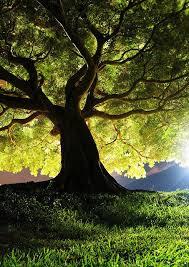 Pin de Bonnie Rudolf en Photography & Such   Fotografía de árboles ...