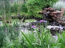 install a pond water garden
